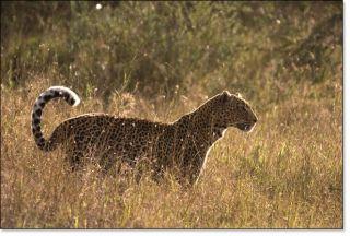 mara plains camp masai mara