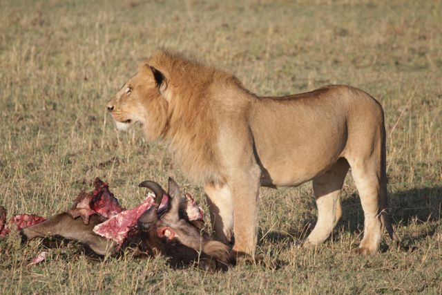 orobica-viaggi-wild-safari-amboseli-mara-kenya