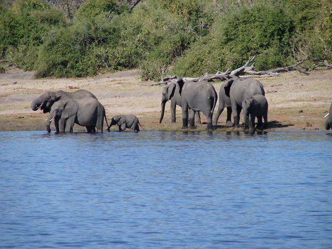 orobica-viaggi-Botswana-Zimbabwe-Elephant-Paths