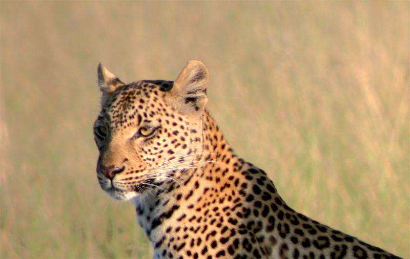 orobica-viaggi-offerte-safari-kenya