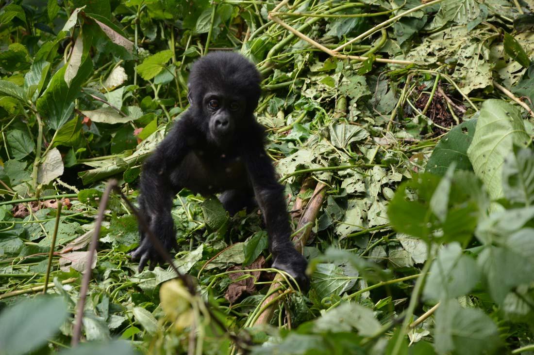 orobica-viaggi-offerta-uganda-gorilla-kibale-queen-elizabeth-bwindi