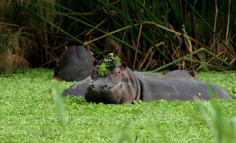orobica-viaggi-offerta-uganda-queen-elizabeth-national-park