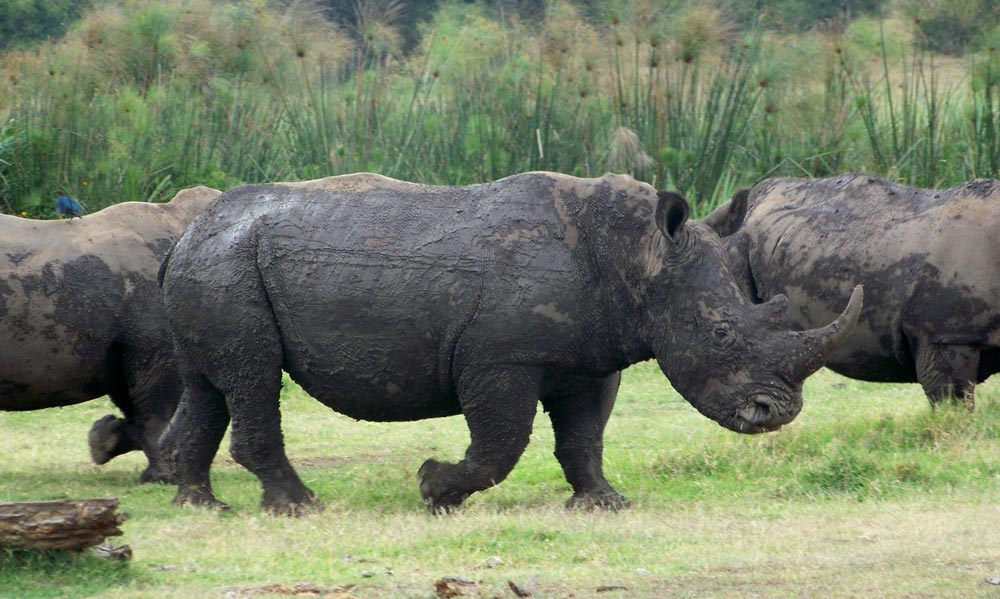 orobica-viaggi-offerte-safari-botswana