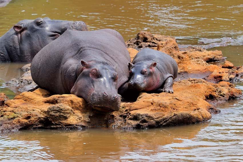 orobica-viaggi-offerte-safari-tanzania-mare